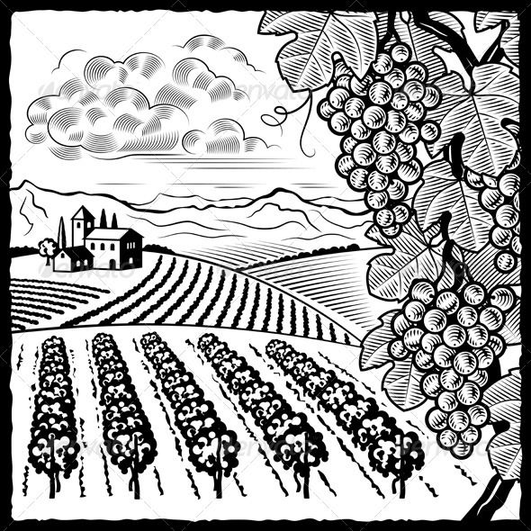 590x590 Vineyard Landscape Black And White Landscaping, Cloud Drawing