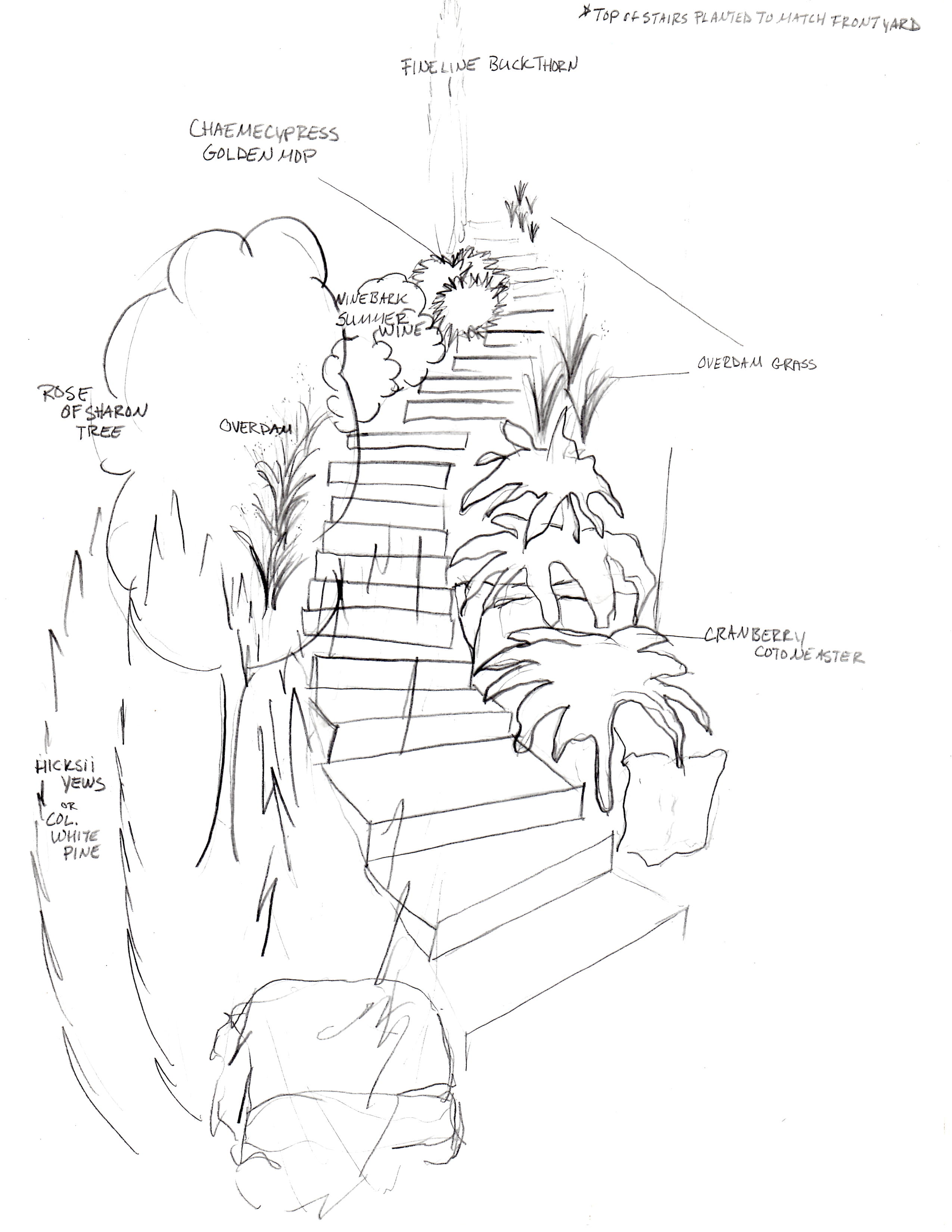 Landscape Design Drawing at GetDrawings com | Free for