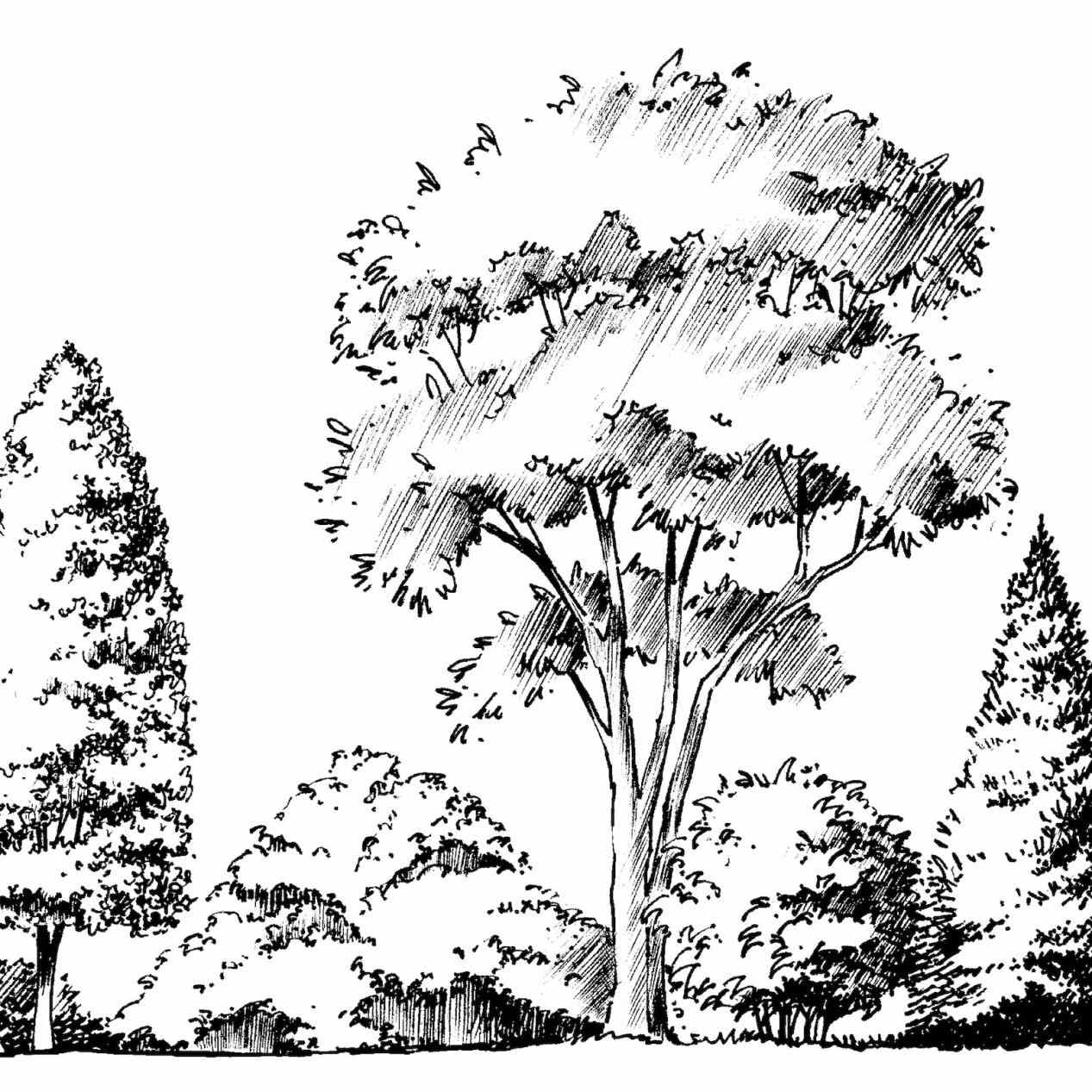 1267x1267 Landscape Drawing Different Landscapes Pine Trees Hand Stock