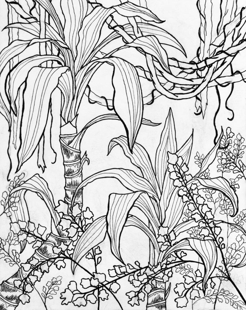 813x1024 Contour Line Landscape Drawing