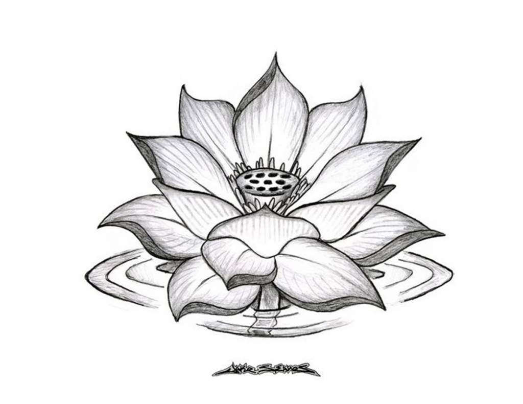 1024x790 Lotus Flower Pencil Drawing Lotus Flower Pencil Drawing