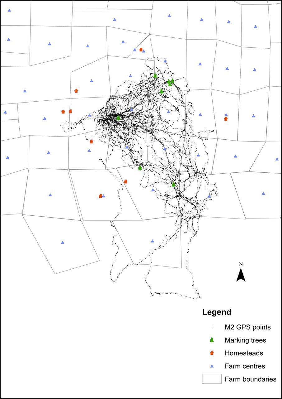 906x1280 Movement Patterns Of Cheetahs (Acinonyx Jubatus) Farmlands