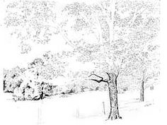 236x177 Pen And Ink Drawings Tree Foliage, How To Draw Tree Leaves, Pen