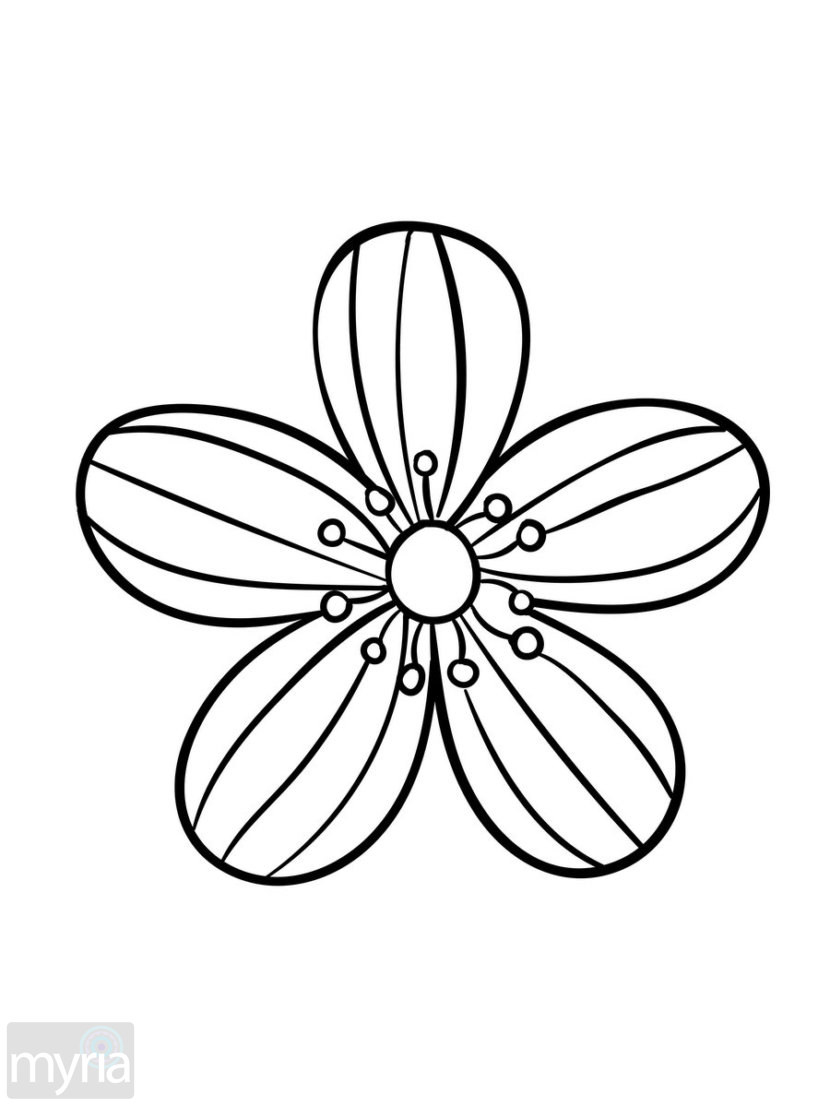 Large Flower Drawing at GetDrawings.com | Free for personal use ...