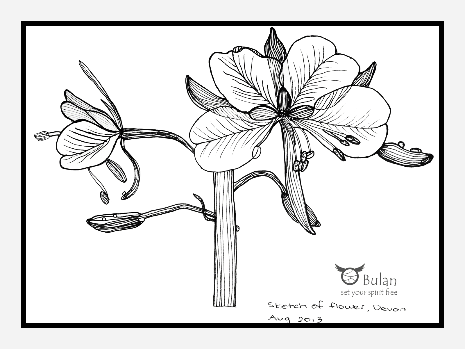 Large Flower Drawing at GetDrawings | Free download
