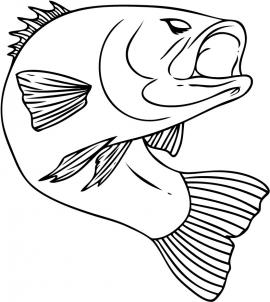 270x302 How To Draw A Bass Fish Step 6 Painting Bass, Fish