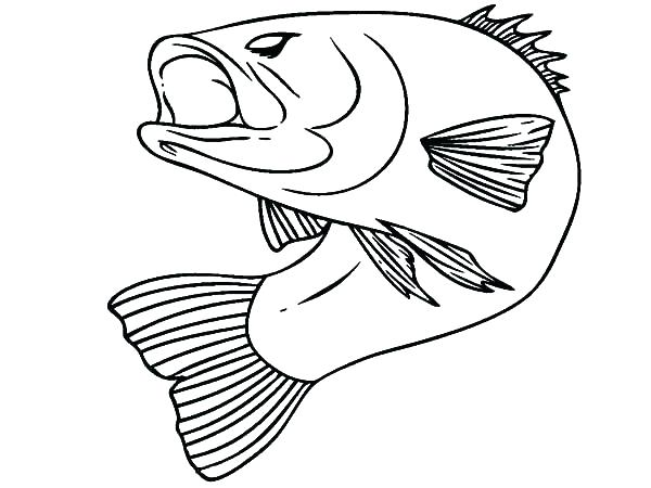 600x450 Bass Coloring Pages Good Coloring Pages Bass Fish Largemouth Bass