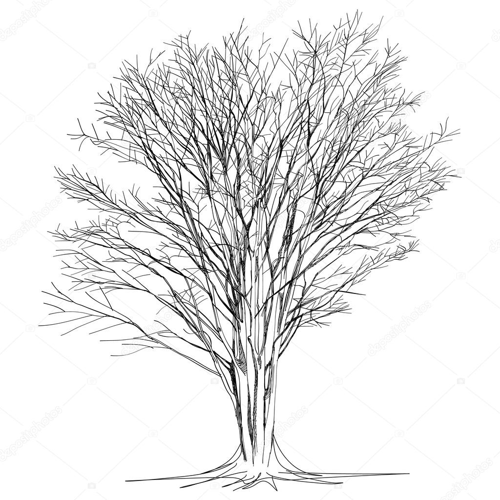 1024x1024 Large Bare Tree Without Leaves