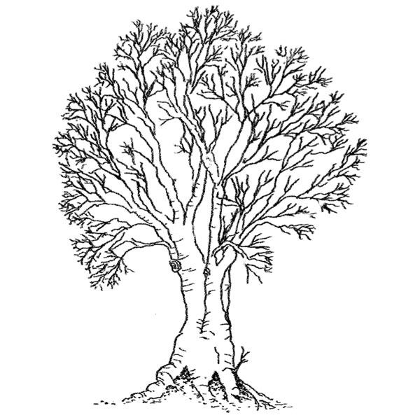600x600 Purple Daisy Design N 374 Large Bare Tree