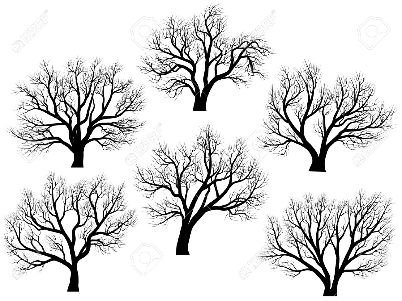 1300x975 Set Of Vector Silhouettes Of Deciduous Large Trees Without Leaves