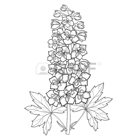 450x450 99 Larkspur Stock Illustrations, Cliparts And Royalty Free