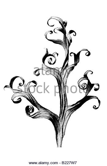 348x540 Larkspur Black And White Stock Photos Amp Images