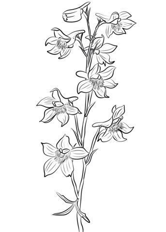 343x480 Larkspur Coloring Page Free Printable Coloring Pages