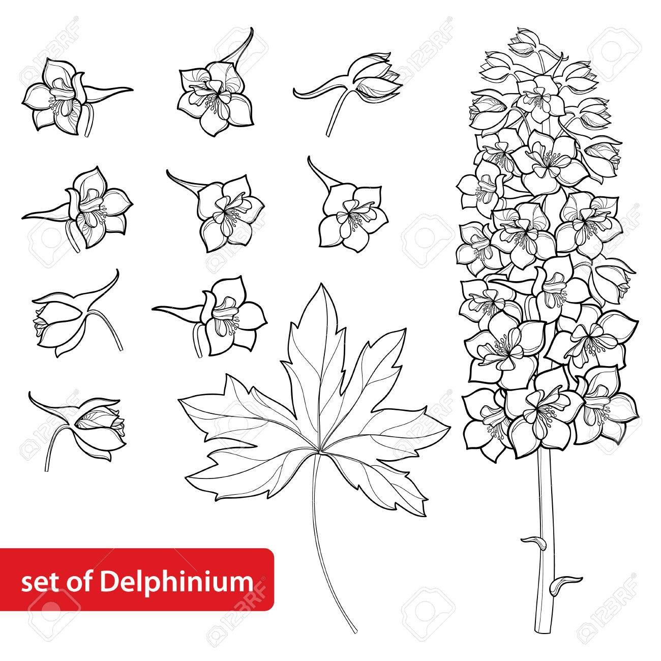 1300x1300 Set With Delphinium Or Larkspur. Flower, Bunch, Bud And Leaf