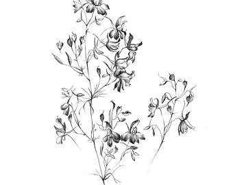 340x270 Sketch Of Flowers Etsy