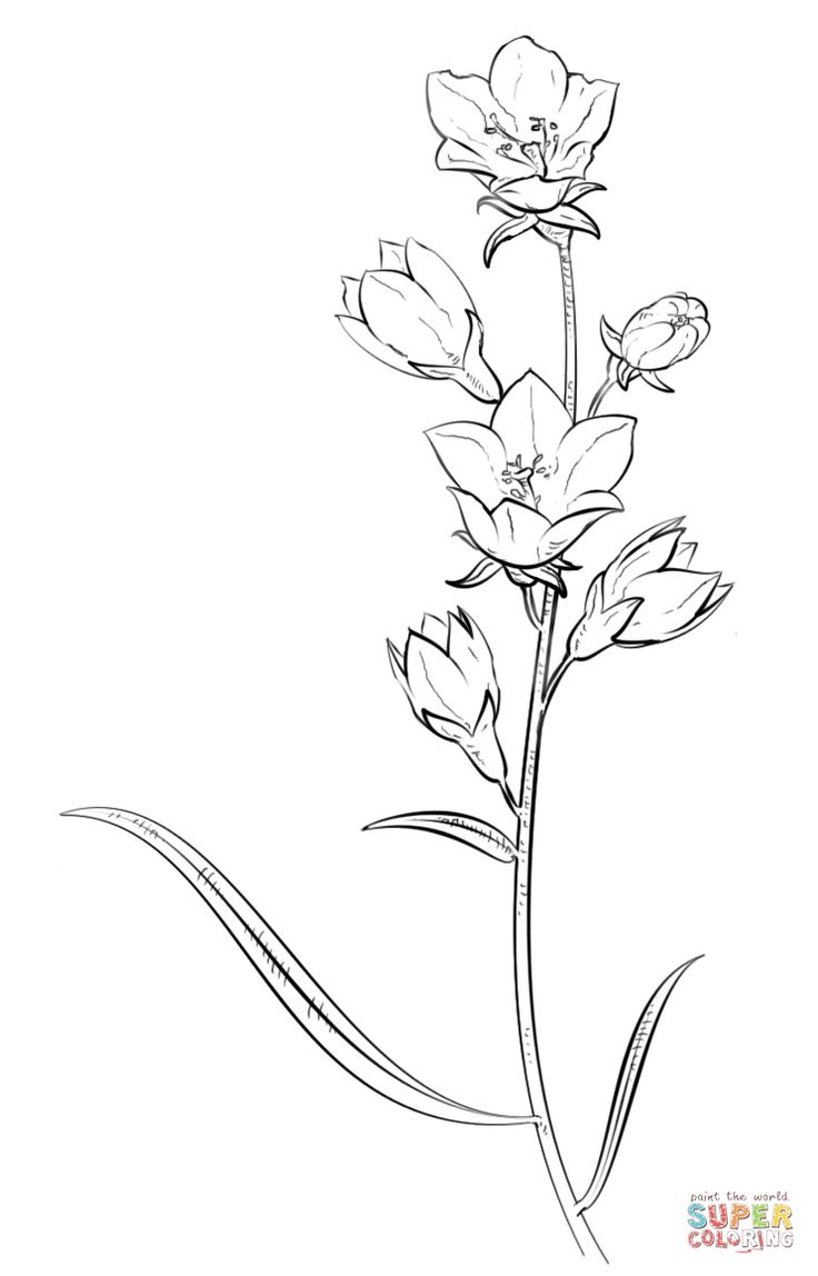 736x1148 Best Free Printable Larkspur Flowers Coloring Books Printable