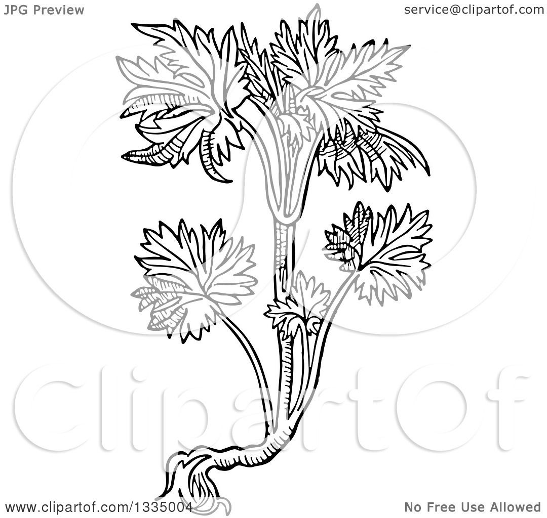 1080x1024 Clipart Of A Black And White Woodcut Herbal Consolida Larkspur