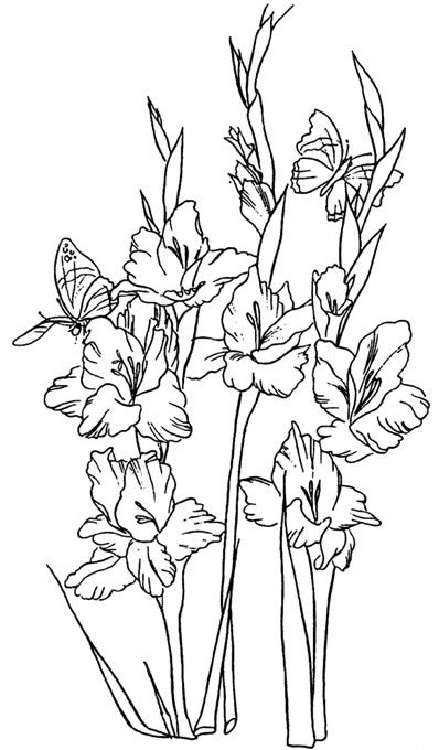 398x680 Clip Art Of Gladiolus Flowers Done In Black And White Line