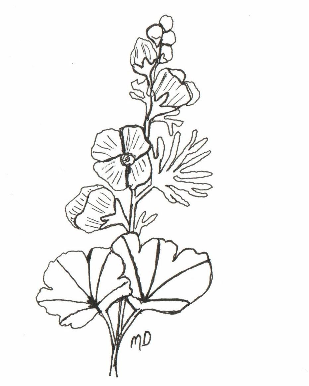 932x1163 The Wild Garden Hansen's Northwest Native Plant Database