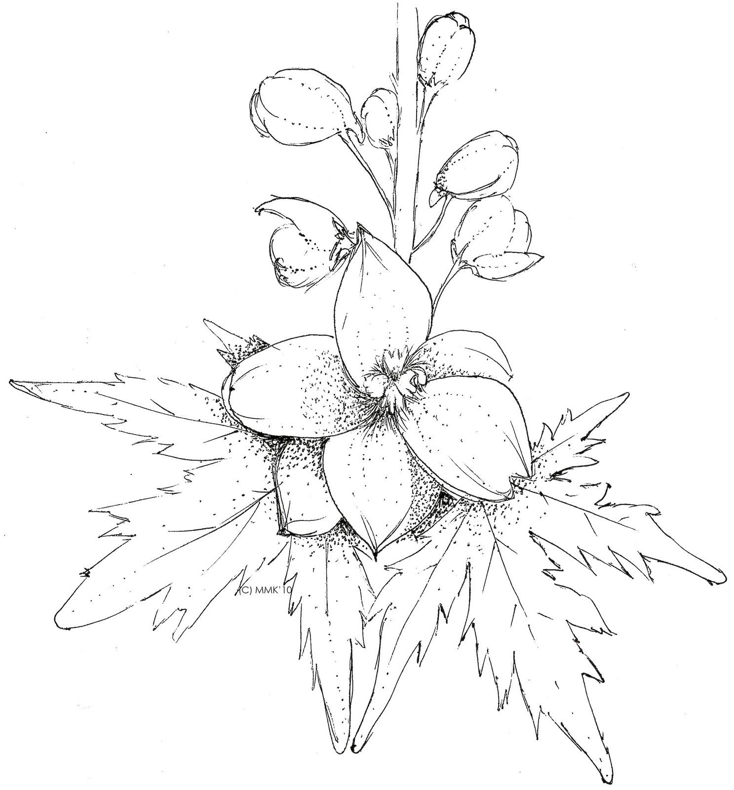 Larkspur Flower Drawing At GetDrawings
