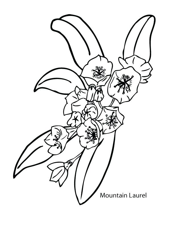 612x792 Coloring Pages Of Mountains Mountain Laurel Printable Coloring