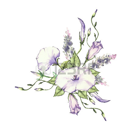 Lavender Botanical Drawing
