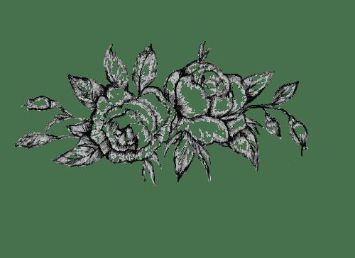 500x364 Botanical Drawing Lavender