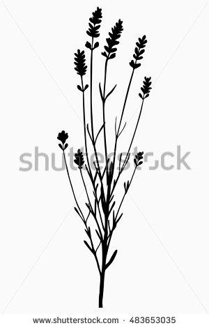 300x470 Bunch, Sprig Of Lavender Flower