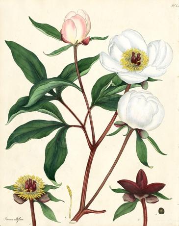 365x461 64 Best Botanical Art Images On Botanical Drawings