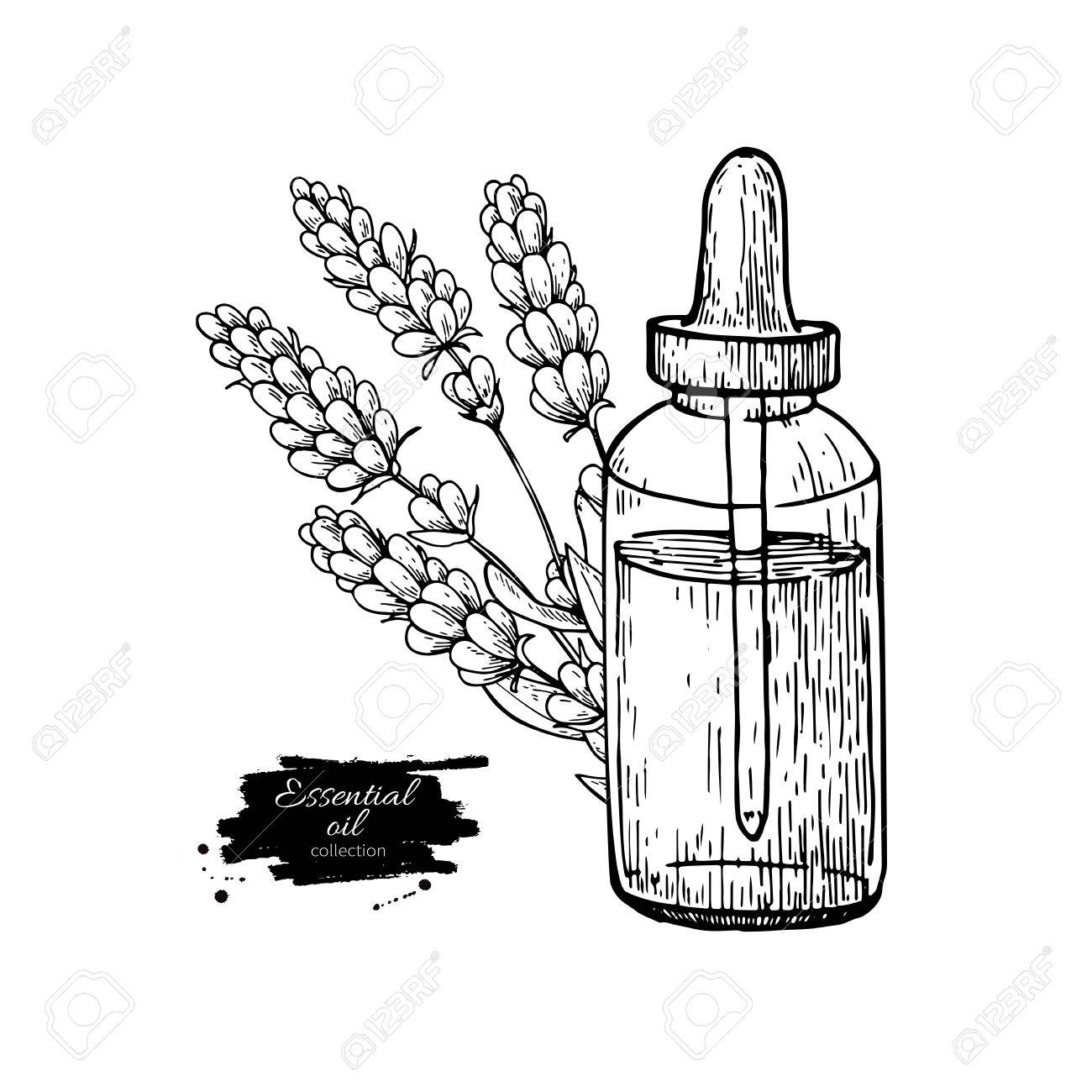 1300x1300 Lavander Essential Oil Bottle And Bunch Of Flowers Hand Drawn