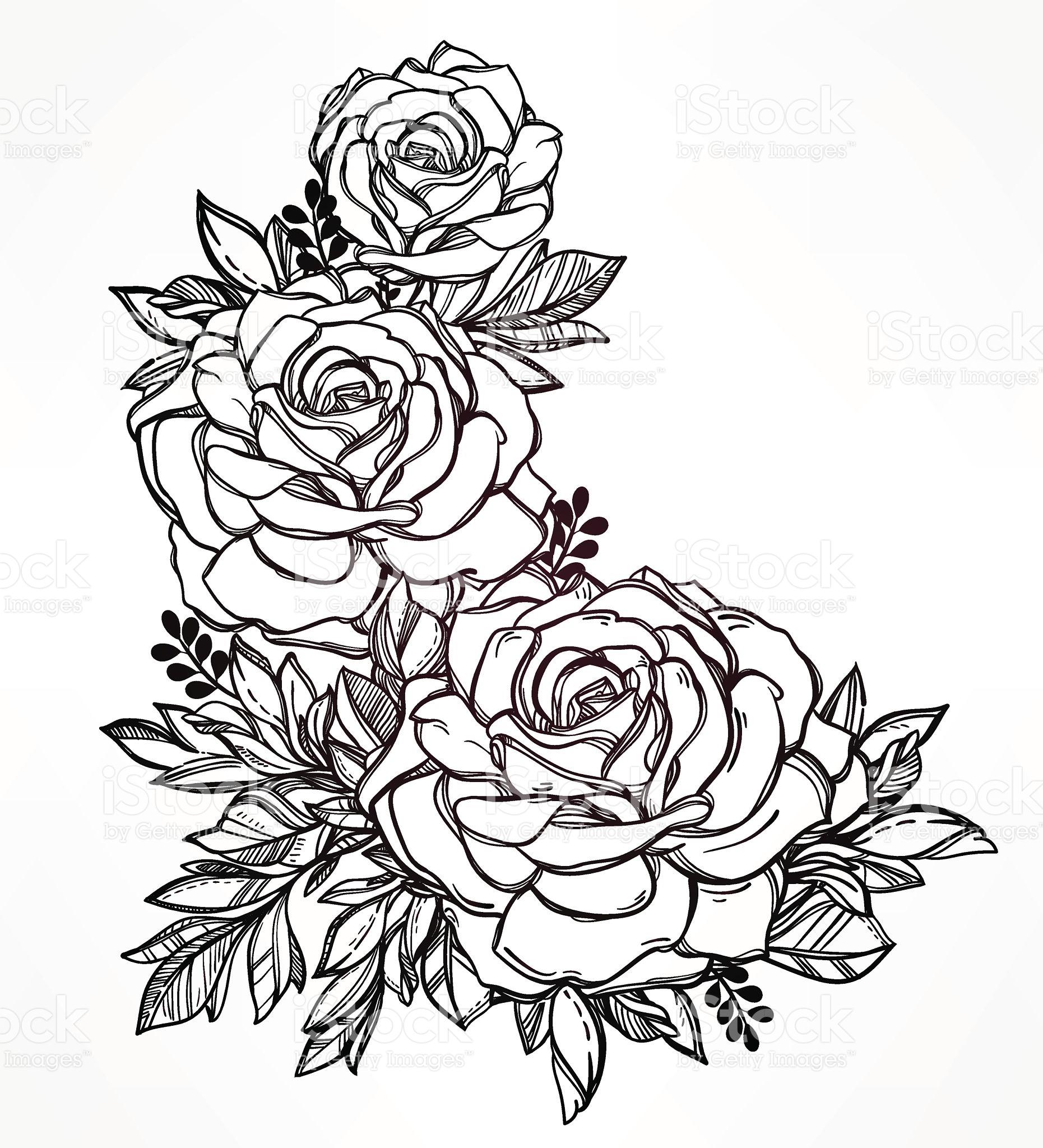 1861x2048 Vintage Floral Highly Detailed Hand Drawn Rose Flower Stem