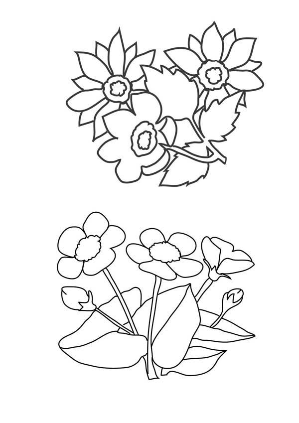 600x849 Flower Arrangements Drawing