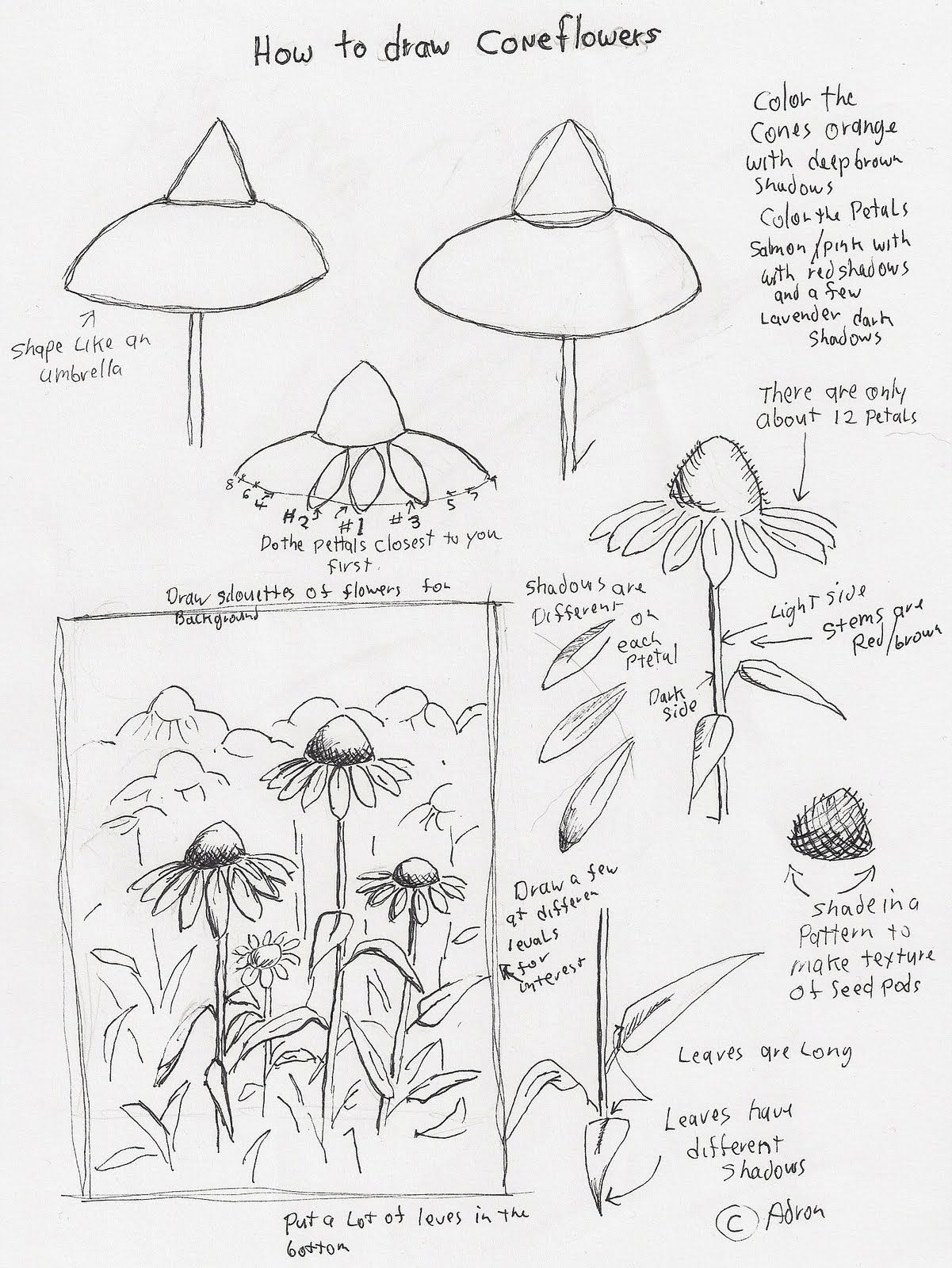 1201x1600 Adron's Art Lesson Plans How To Draw Cone Flowers Art Lesson