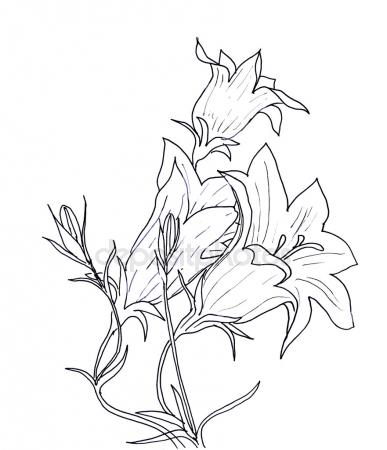387x450 Jasmine Flowers, Lavender And Natural Branches Hand Drawn Sketch