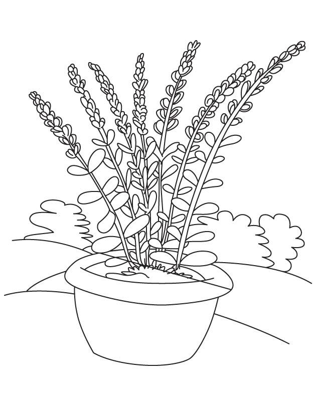 630x810 Lavender Flower Pot Coloring Page Download Free Lavender Flower
