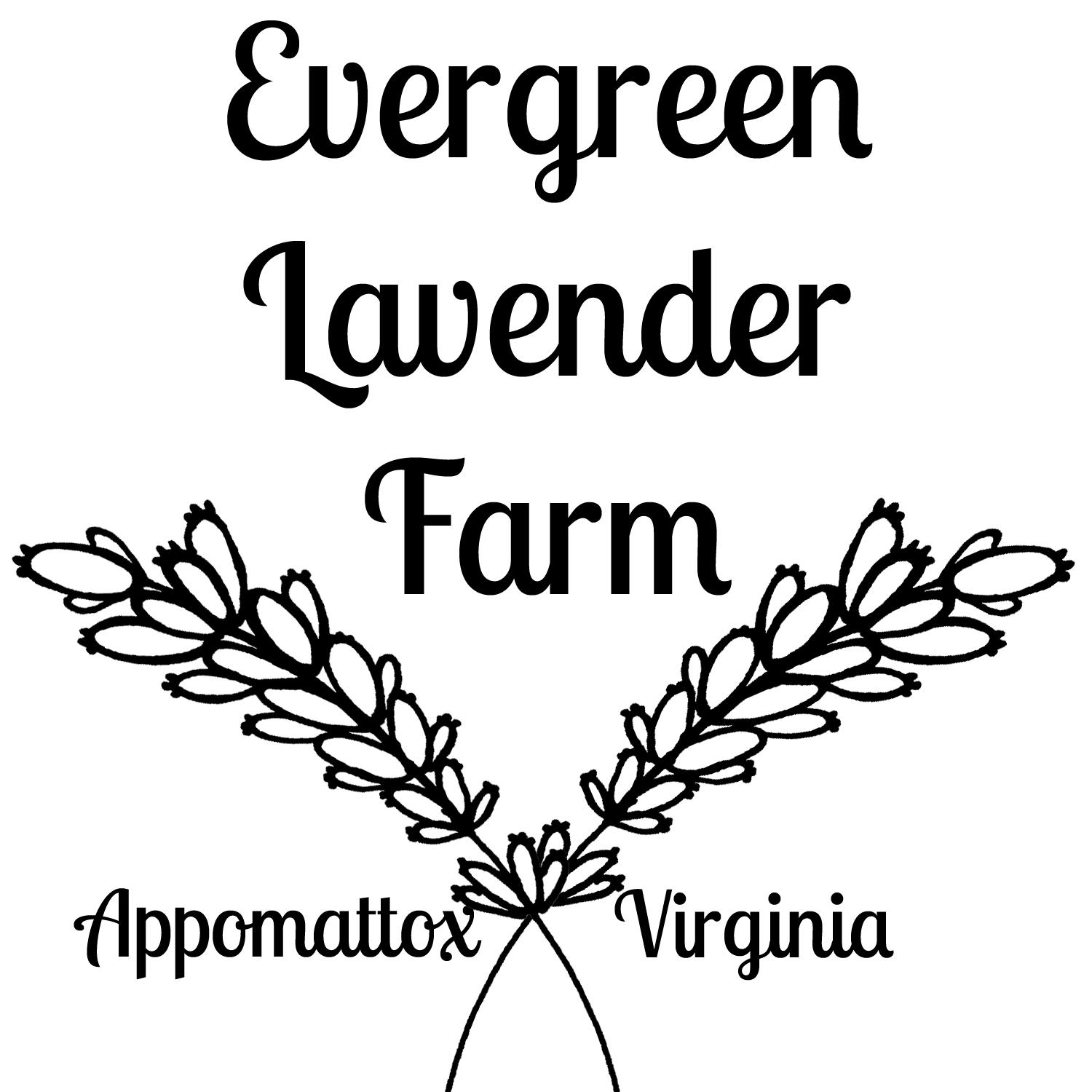 1500x1500 Evergreen Lavender Farm