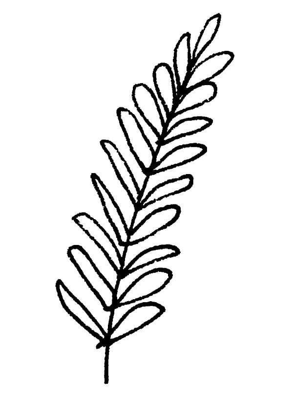 600x814 Lavender Plant Drawing
