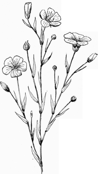 341x604 Drawing Plants And Flowers