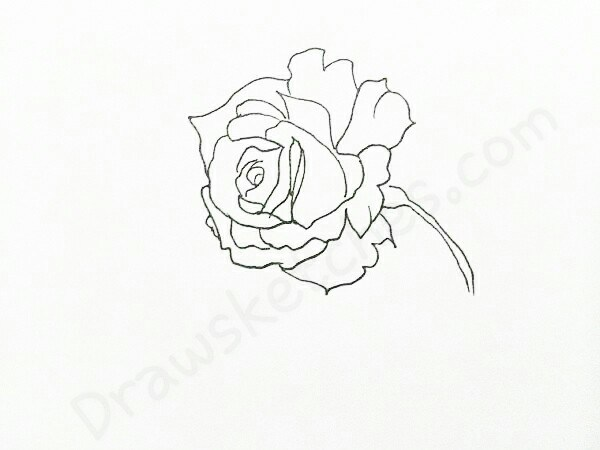 600x450 How To Draw A Rose In 16 Easy And Detailed Steps With (Pictures)