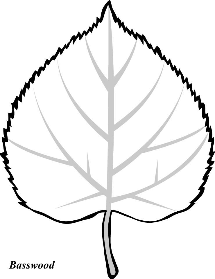 Leaf Drawing Images