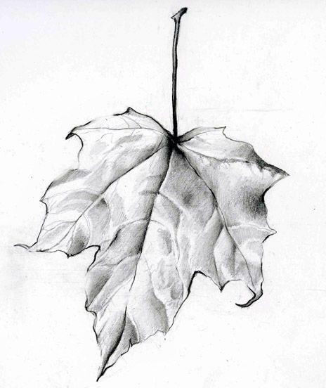 464x552 Leaf Drawing