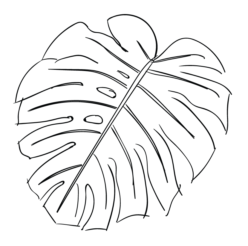 830x821 Monstera Leaf Sketch From Maui Print
