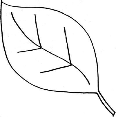 Leaf Drawing Outline