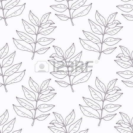 450x450 Hand Drawn Curry Leaves And Branch Outline Seamless Pattern
