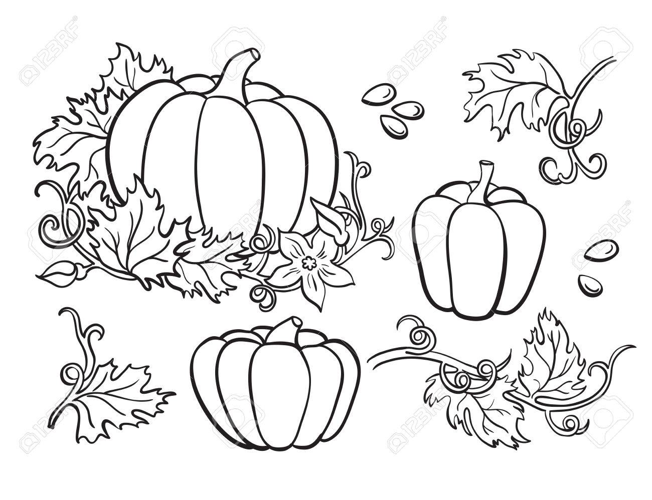 1300x998 Pumpkin Vector Drawing Set. Isolated Outline Vegetable, Plant
