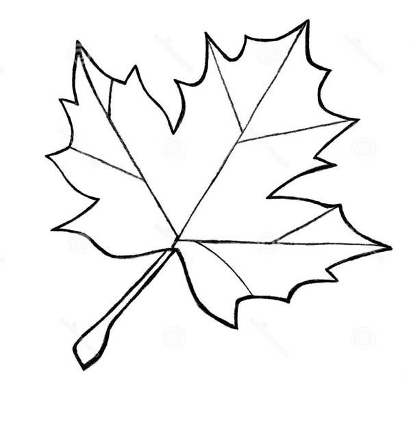 600x624 Sycamore Leaf Template Coloring Page