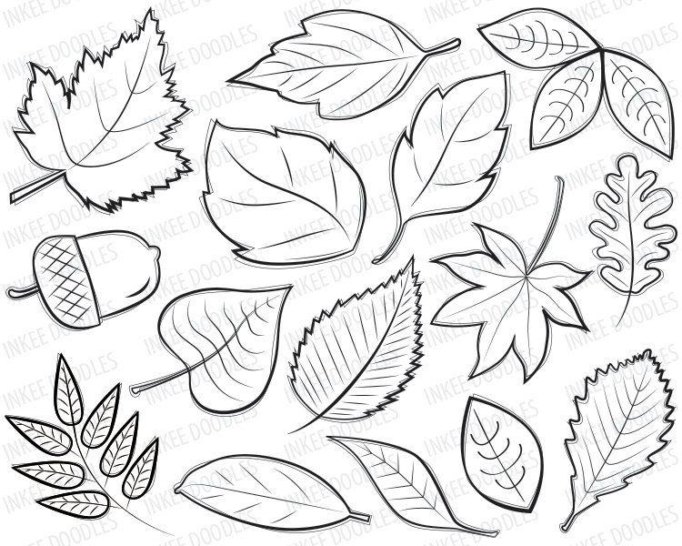 750x600 How To Draw Maple Leafndn Oak Leaf Inkspired Musings