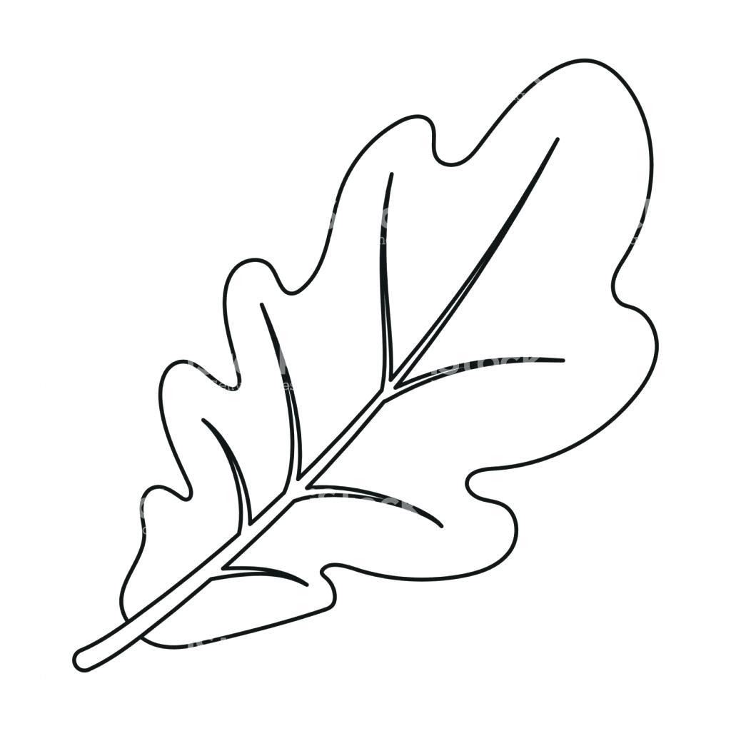 1024x1024 Printable Oak Leaf Outline Printable Fall Harvest Coloring Pages