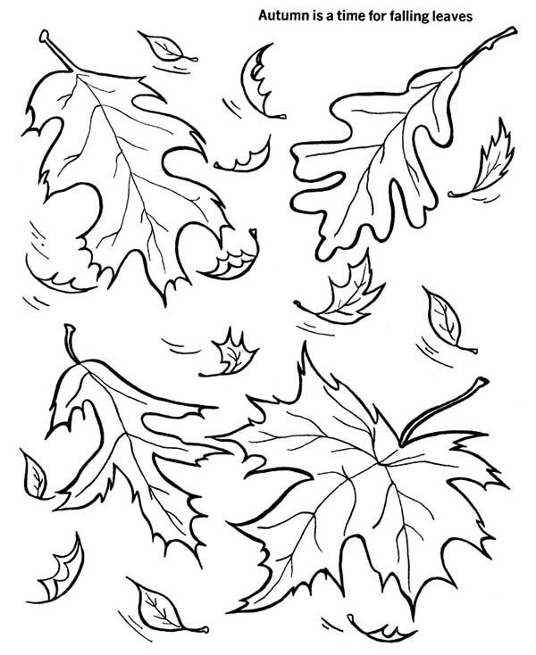 Leaf Drawing Outline at GetDrawings.com | Free for ...