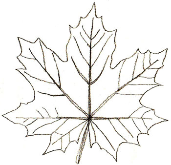 350x338 How To Draw Maple Leaves